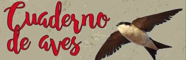 cabecera-14-aves